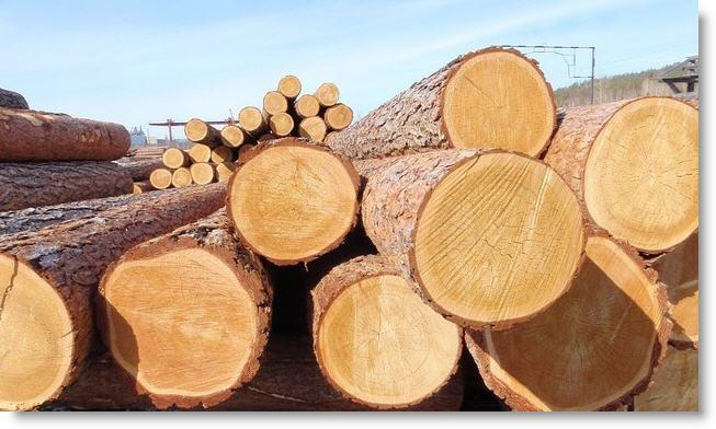 Картинки по запросу Деловая древесина