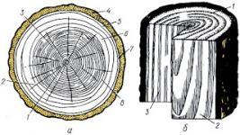 Как определять основные породы древисины?