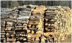 Твердость древесины таблица