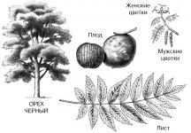 Стоимость древесины ореха