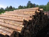 Таблица расчета кубатуры леса
