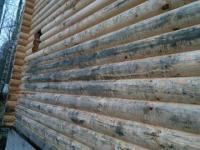 Чем уничтожить грибок на древесине