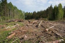Договор о обработке дерева