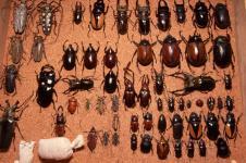 Древесные жуки