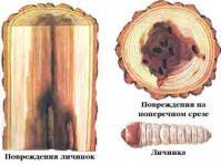 Строение древесины на пилораме