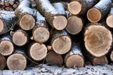 Договор на заготовку древесины образец