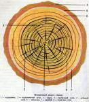 Макростроение древесины