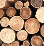 Электрические явления в древесине