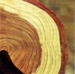 Плотность сырой древесины