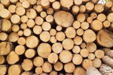 Какая древесина тверже дуба?