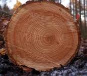 Текстуры древесины ель